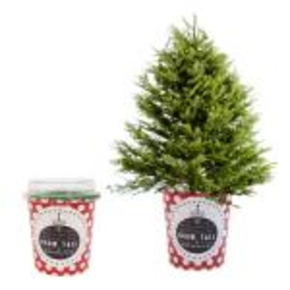Grow your own Christmas tree with Ellie Ellie > Creative Review ...